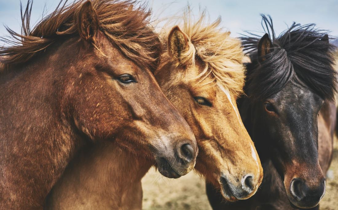 """""""Horses for courses"""" – The various uses for fixed income"""